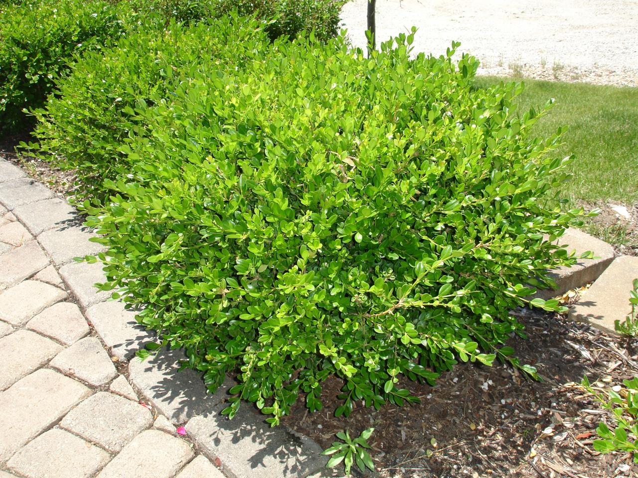 Landscaping ideas with names of plants pdf for Small bushes for landscaping